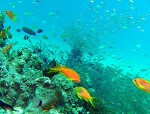 Zanzibar archipelago coral reef