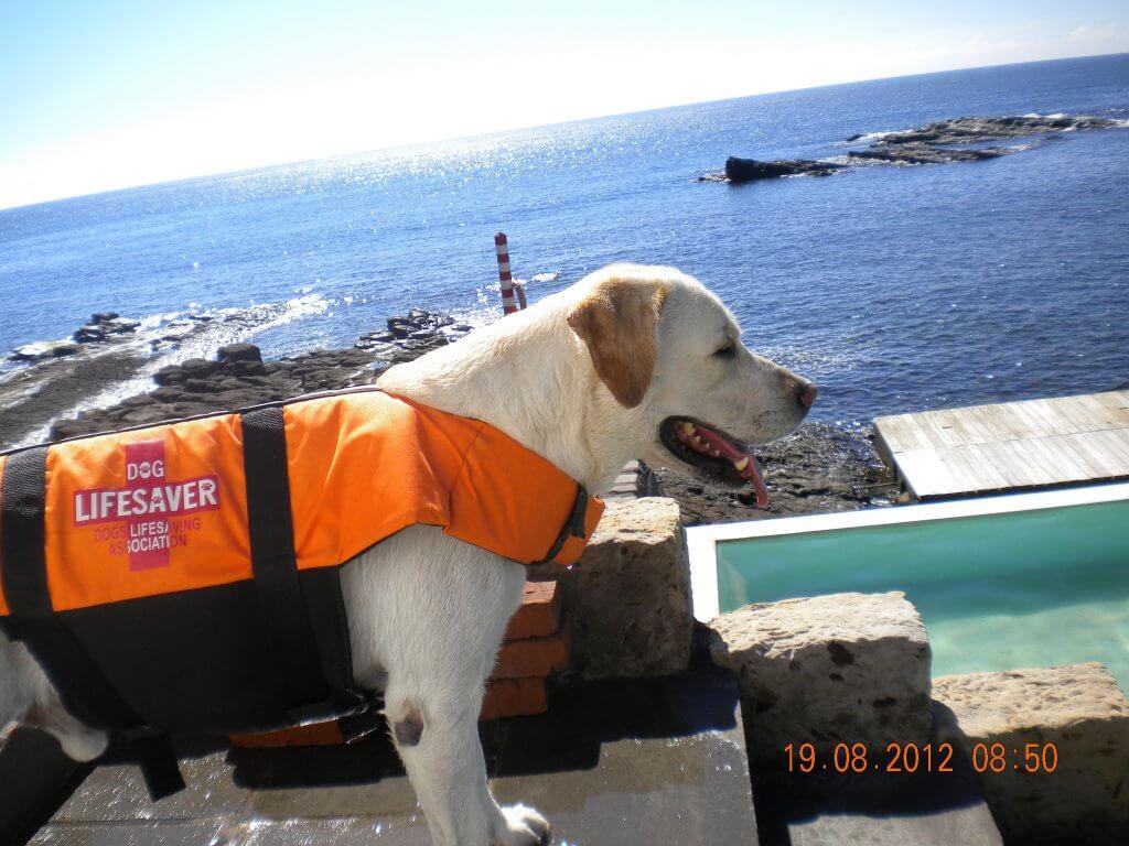 Doggie Lifejacket